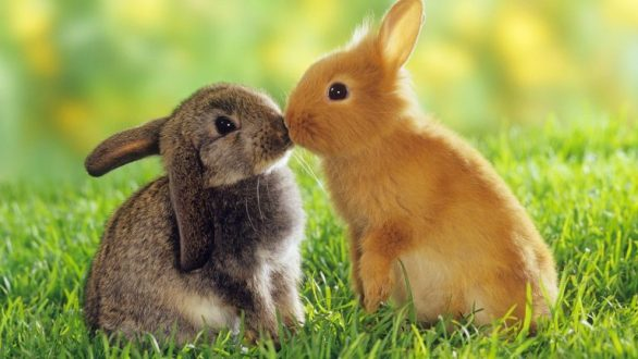 Cute Easter Bunny Pictures
