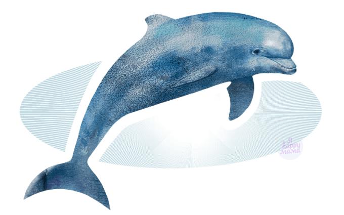 Загадки про дельфинов