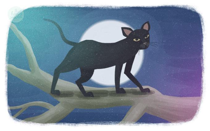 Сказка Кошка, которая гуляла сама по себе