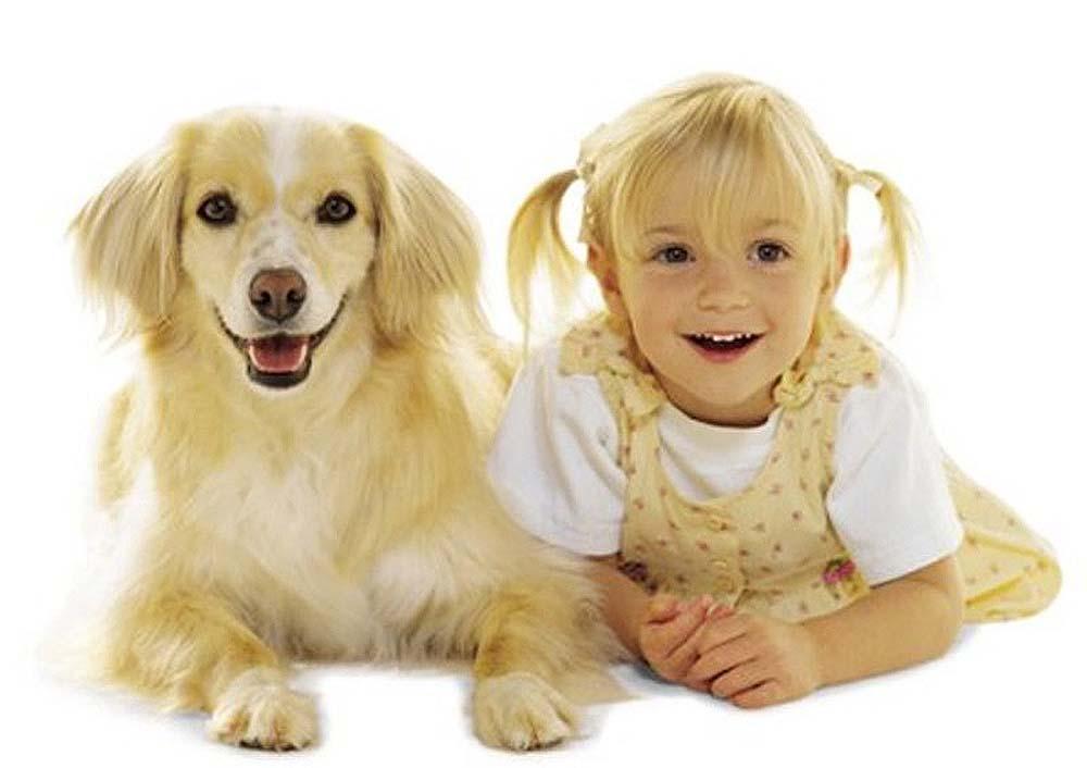 Дети и собаки. Кто на кого похож?