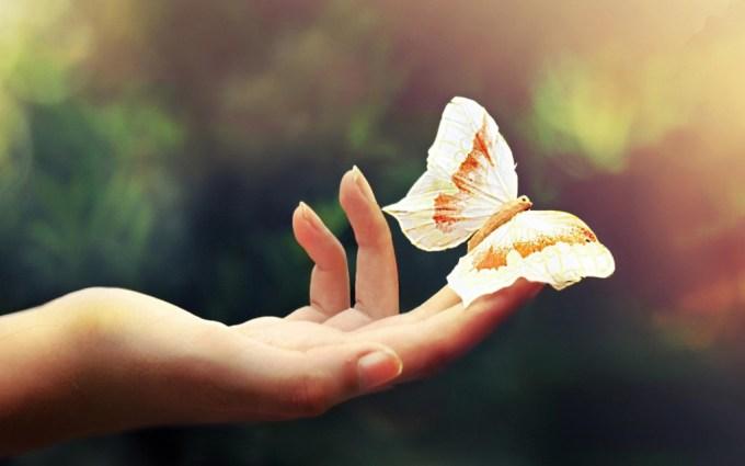 урок бабочки