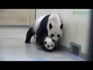 Мама-панда укладывает малыша спать