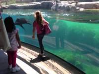 Морской лев играл с девочкой и очень испугался, когда она упала