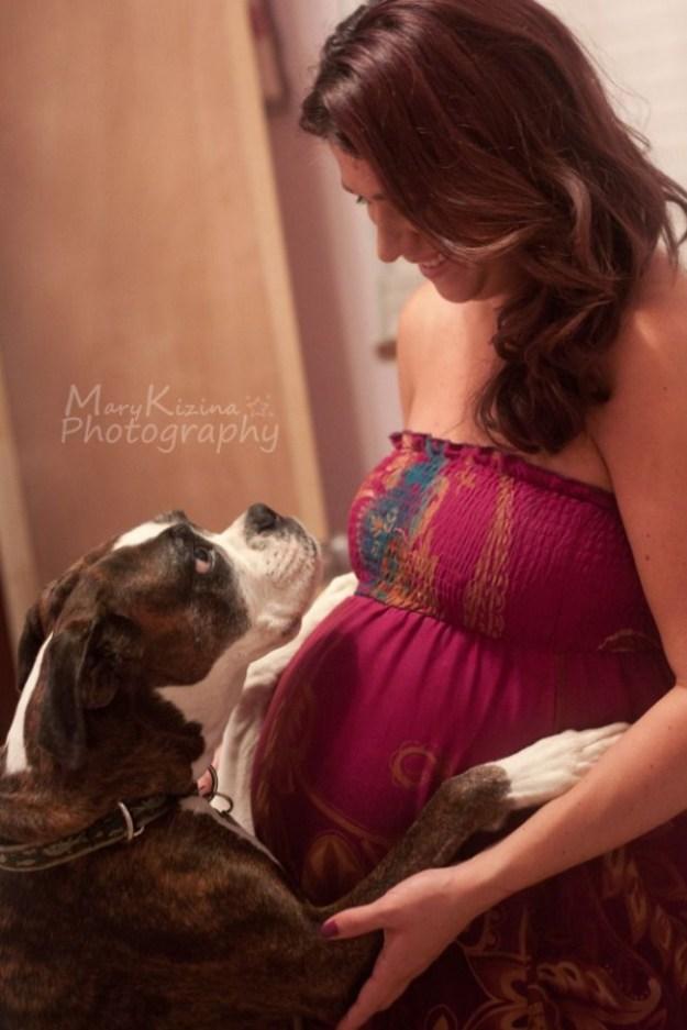 пес в ожидании малыша2