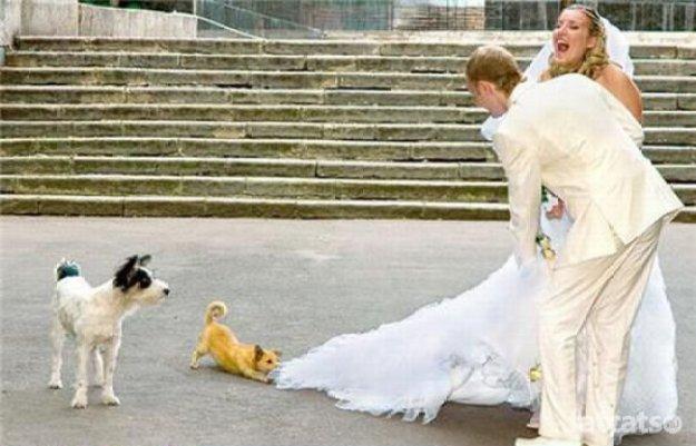 свадебные фотоприколы8