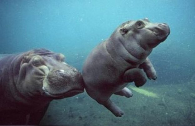 животные мамы 10
