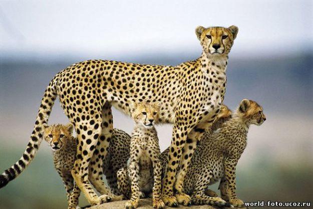 животные мамы 14