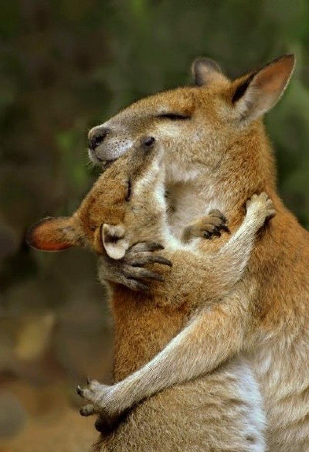 животные мамы 15