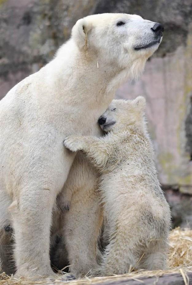 животные мамы 3