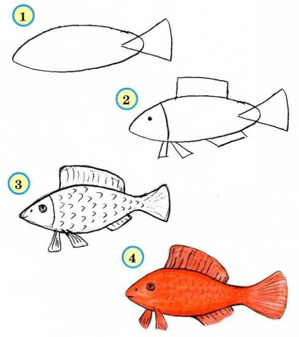 рисуем рыбку