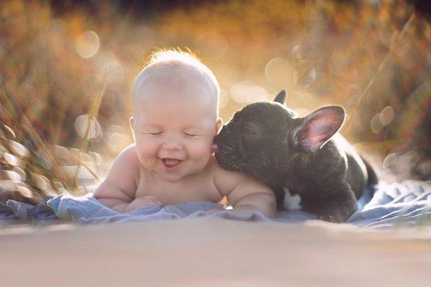 бульдог с малышом