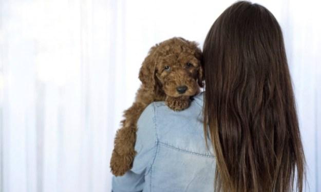 фотосессия со щенком