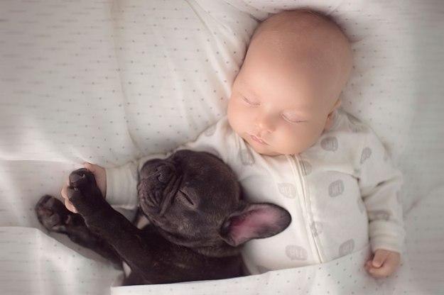 малыш и французский бульдог