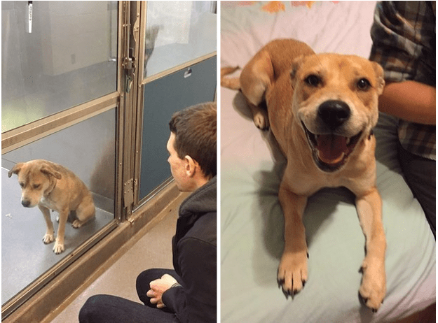 собака после приюта