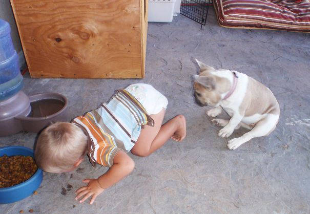 мальчие кст из миски собаки
