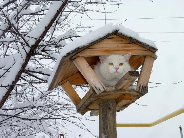 коты прилетели