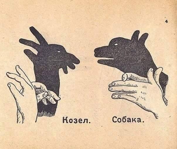 тень собака