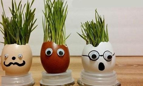 Смешной огород в яичной скорлупе. Интересное занятие для деток