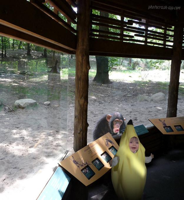 Когда решил наведаться в зоопарк в костюме банана