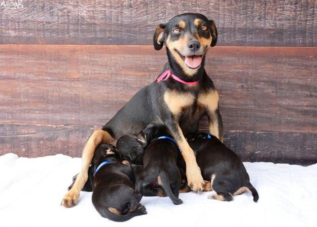 счастливая мама собака