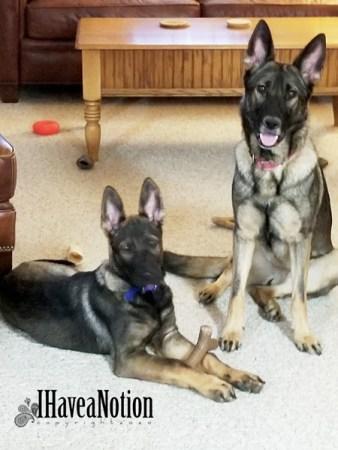 2 pretty dogs