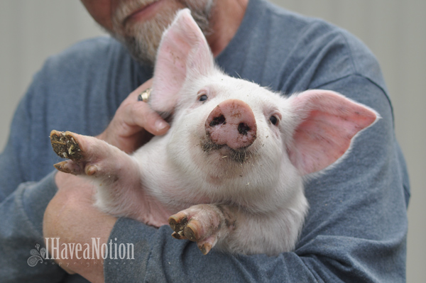 Iggy Piggy