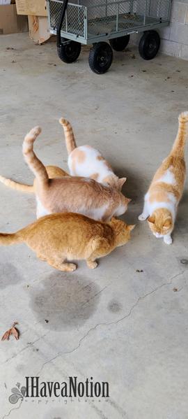 5 cats