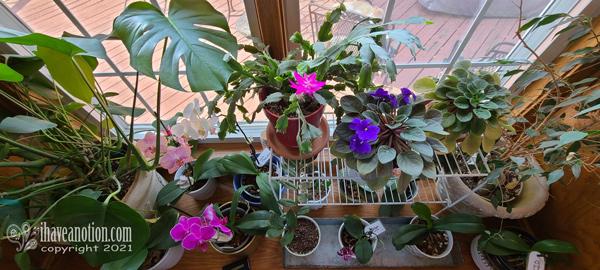 June blooming houseplants