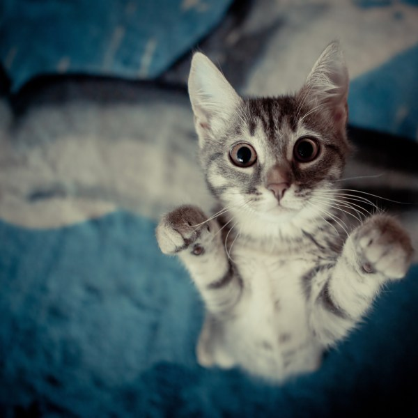 5 Things Cats Know About Life That We Should Learn | I ...