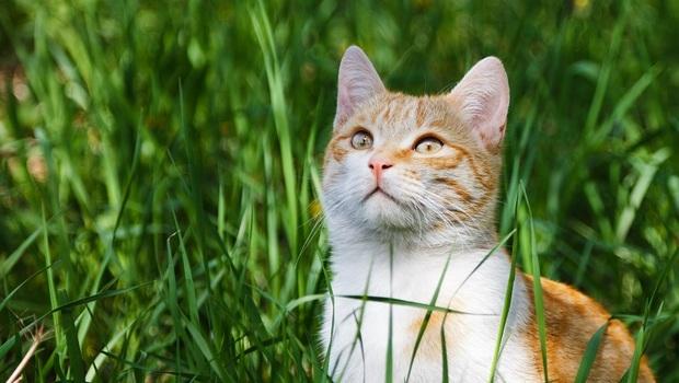 不「遛貓」竟會讓牠生病!獸醫師告訴你:遛貓前,一定要知道的「5大準備、4件事」