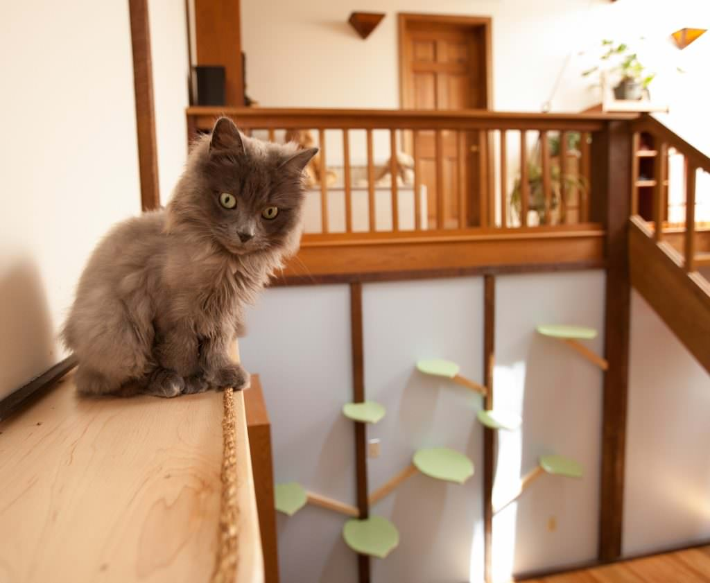 Check Out The Before And After On This Crazy Catification Project