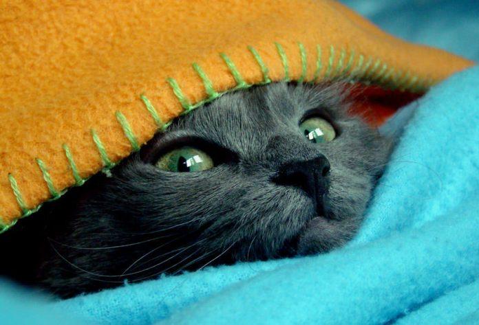 Cat blanket - Imgur