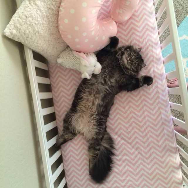 Cat in crib