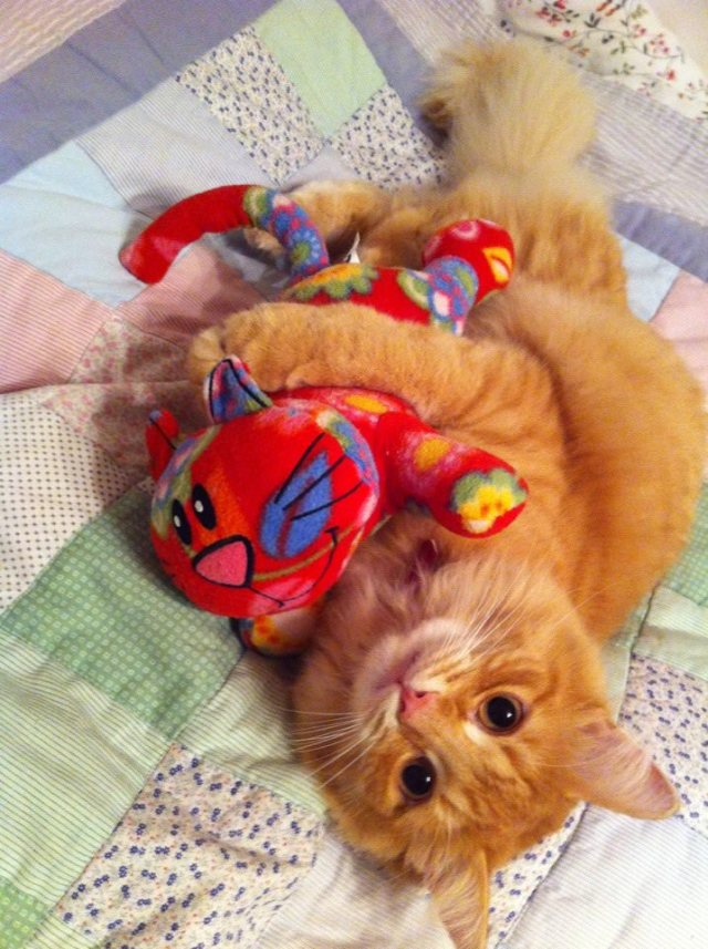 cat and stuffie