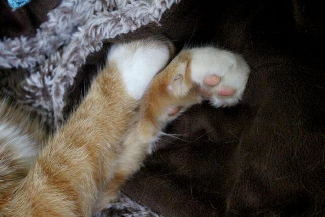 whiskers on cat leg