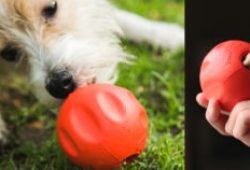 """Initially Constructed for Shelter Canines, This """"Odd Ball"""" is Now Obtainable On-line (Plus an Superior Twist!)"""