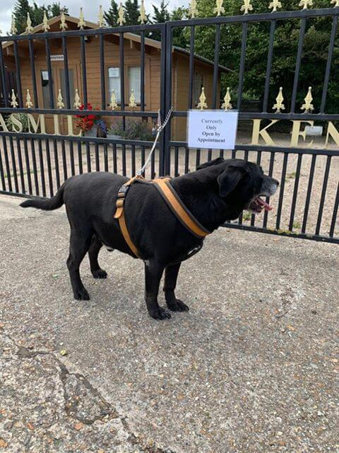 Dog Abandoned at Kennel