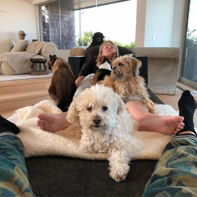 Dogs laying on person