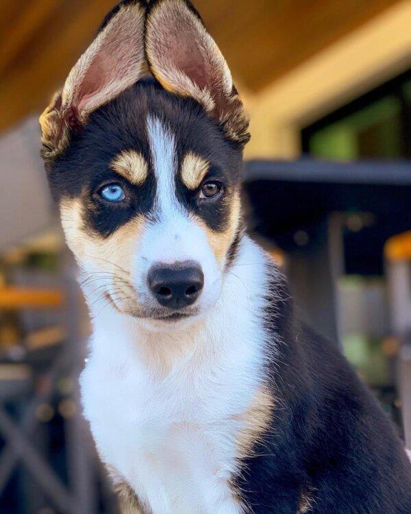 Nick Jonas Puppy