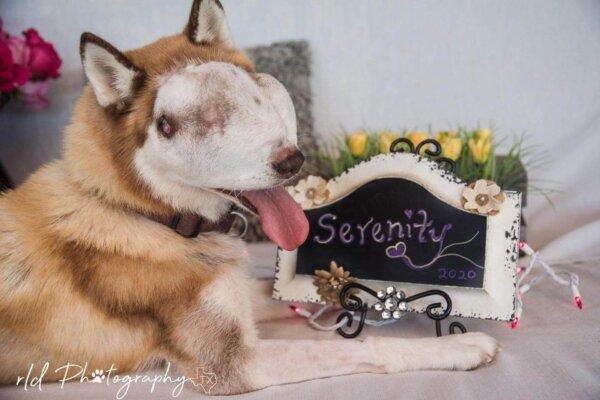 Rescue_Dog_Serenity