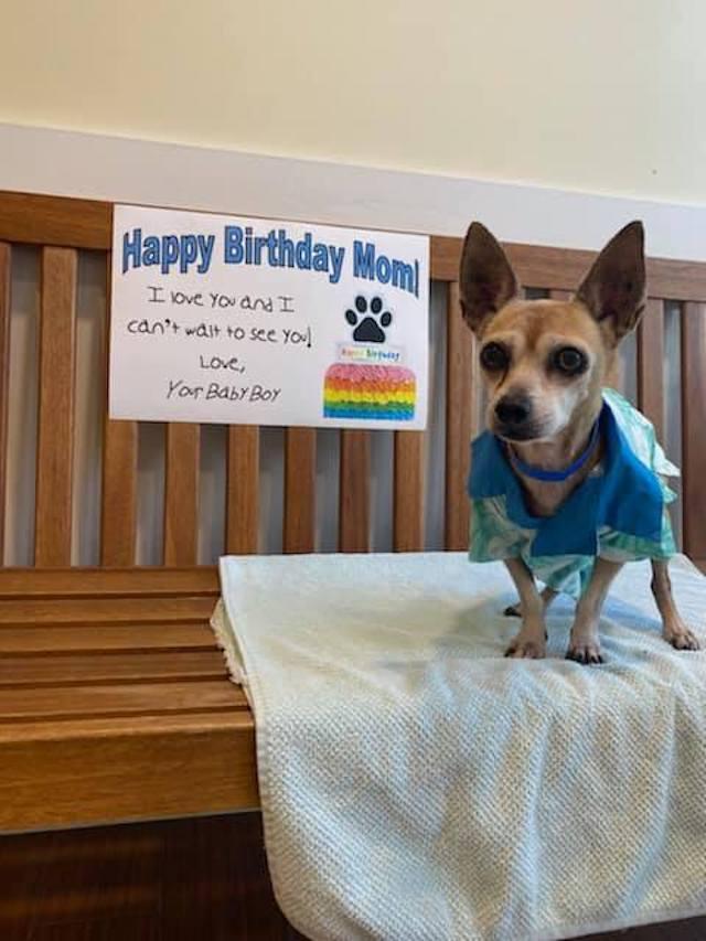 Happy birthday Chihuahua