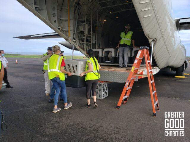 Largest Rescue Dog Flight