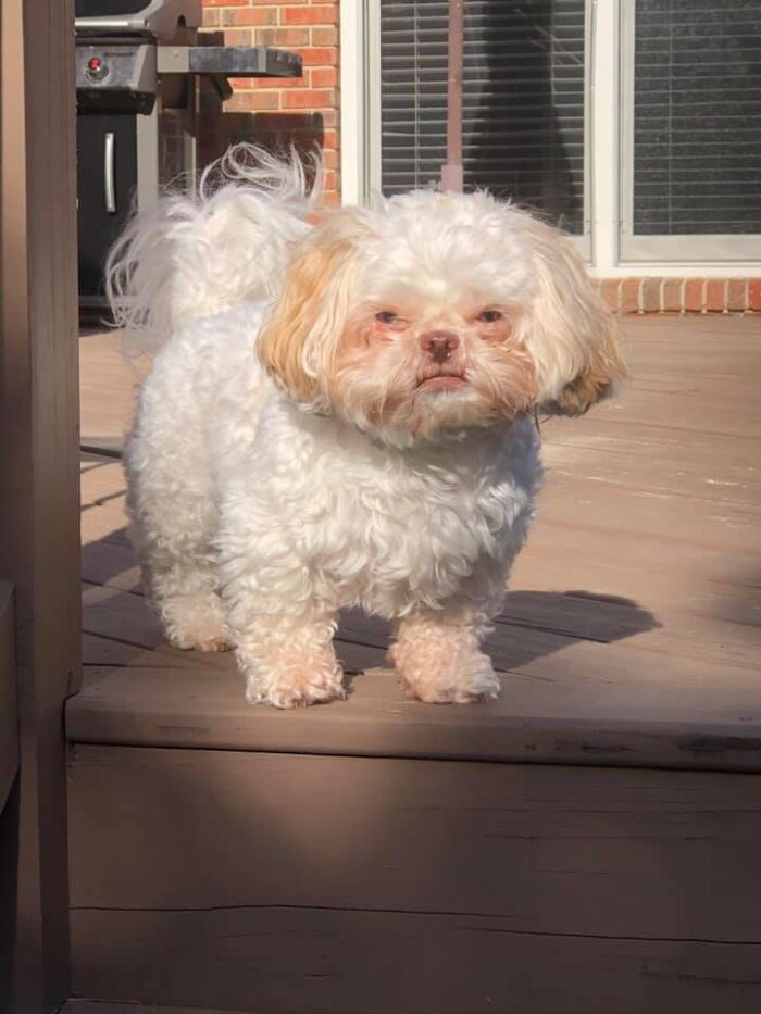 Angry little dog