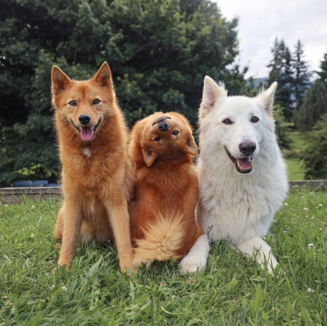 Dog Photobombs pictures
