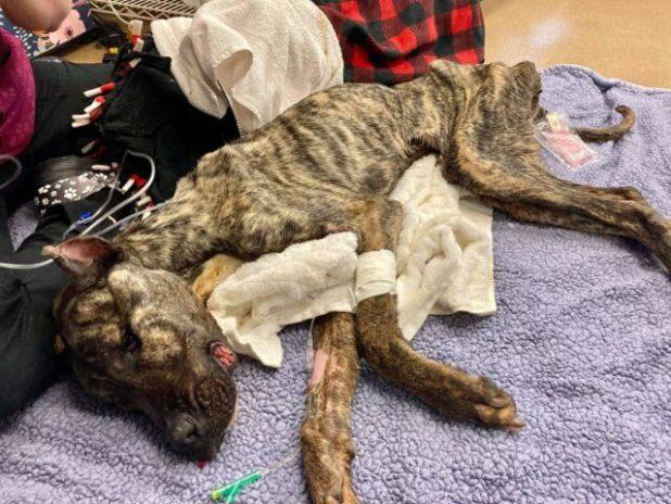 Dying Shelter Dog