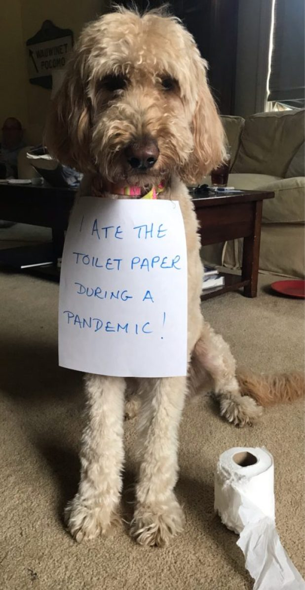 dog-shaming-toilet-paper