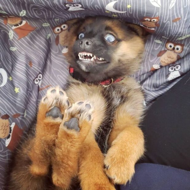 Overly excited puppy