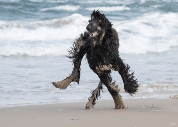 Dog on beach malfunctioning