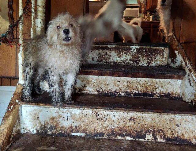 Cães negligenciados resgatados