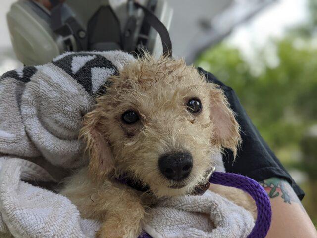 Cachorro doce salvo da negligência